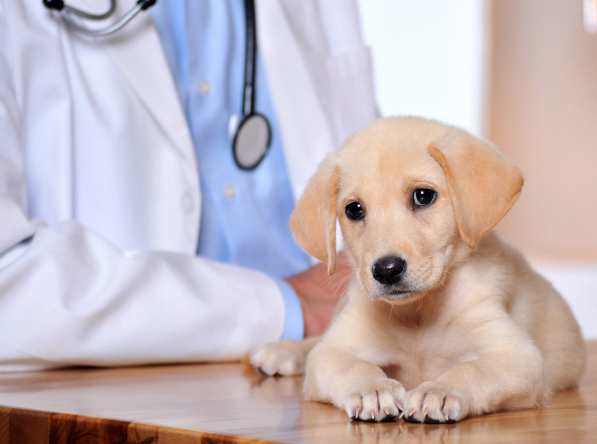 Sparks, Reno, NV. Pet Clinic Insurance